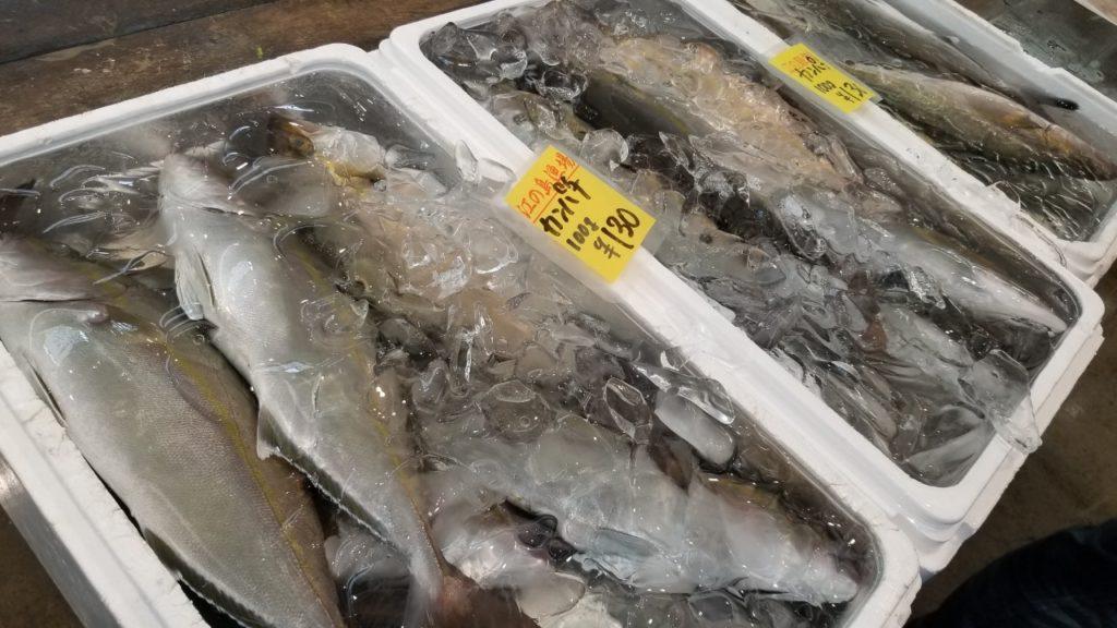 本日のお魚