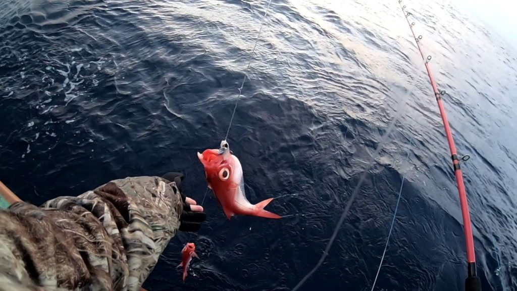 鈴なりで釣れてくるキンメたち