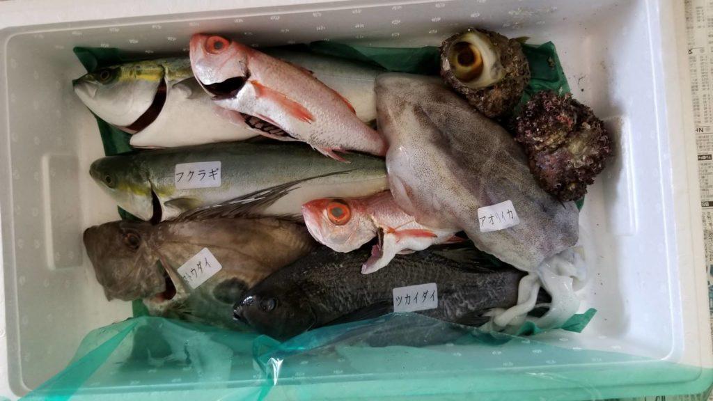 1月に来た鮮魚セット