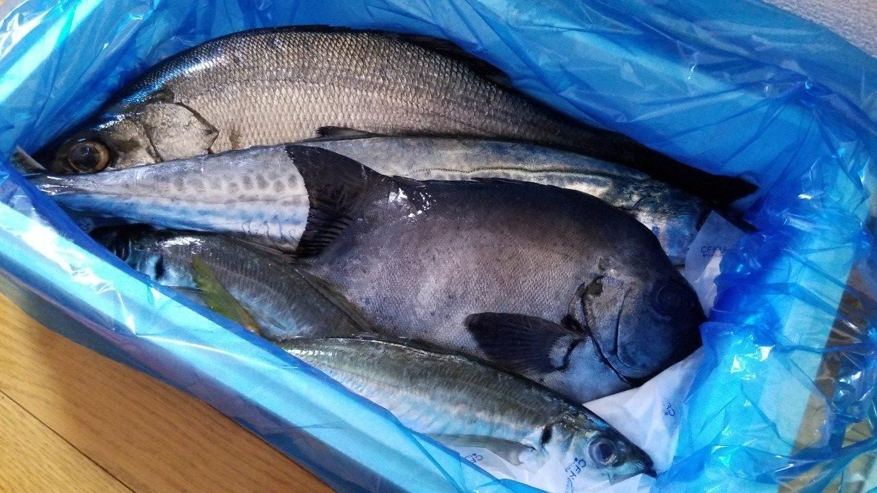 すべて高品質高鮮度の魚たち