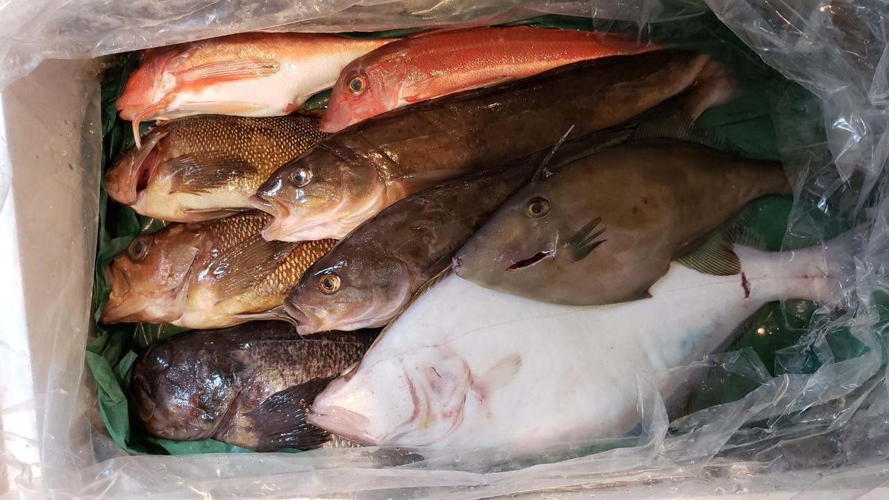 お魚が沢山あるぞーい!!