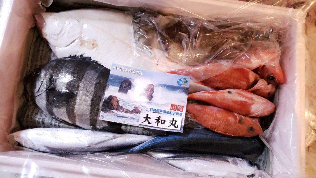 どれも綺麗な魚だ!!